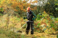 Strimmer In Use