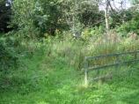Overgrown Area